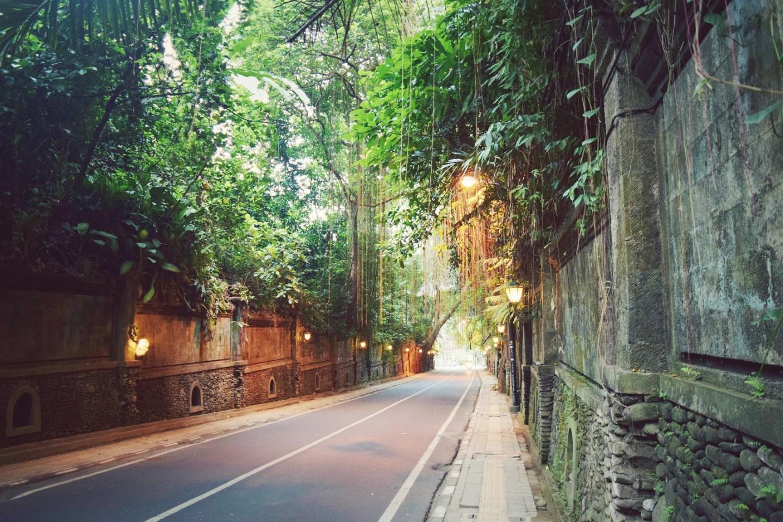 walking to the campuhan ridge walk ubud bali