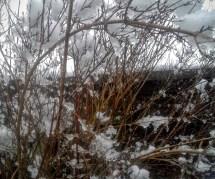 Burdened bush