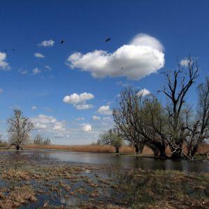 Photo: Kopacki Rit Nature Park