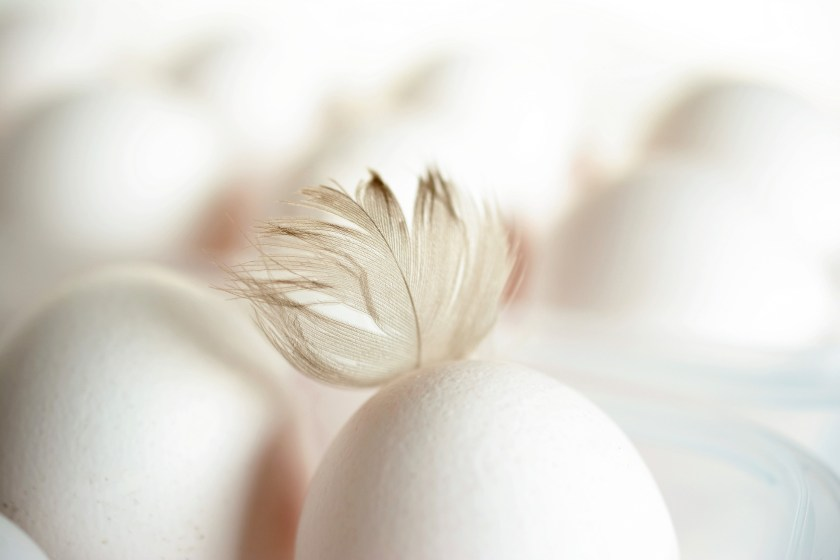 egg with a feather