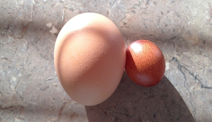 Egg sizes. Eggs vary in size, which will make a difference in recipes, especially those that call for several eggs.