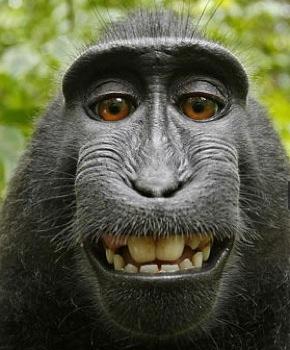 Monkeyselfffffff