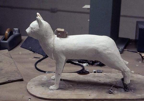 Animal intelligence accoustic kitty model 4