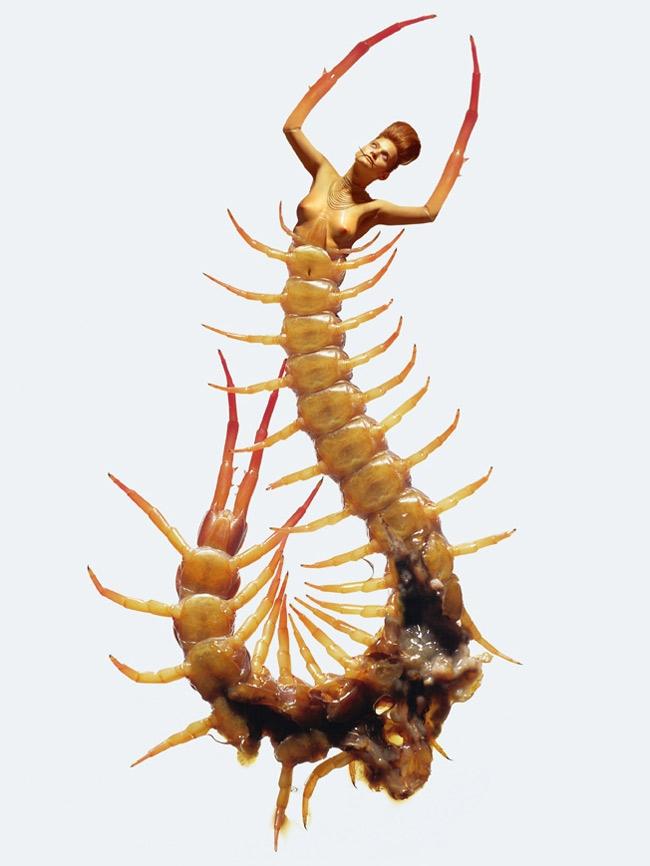 23_insecte-scolopandre