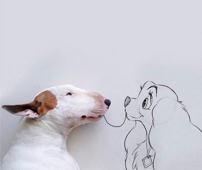 rafael-mantesso-bull-terrier-11