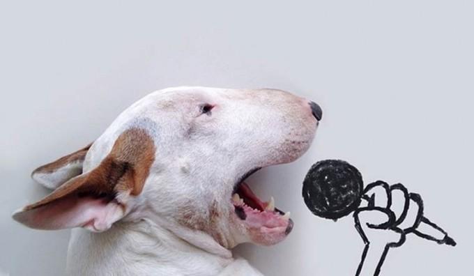 rafael-mantesso-bull-terrier