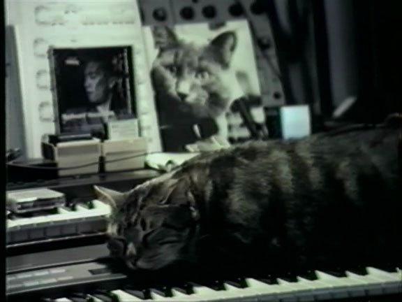 Play him off, Chris Marker Cat.