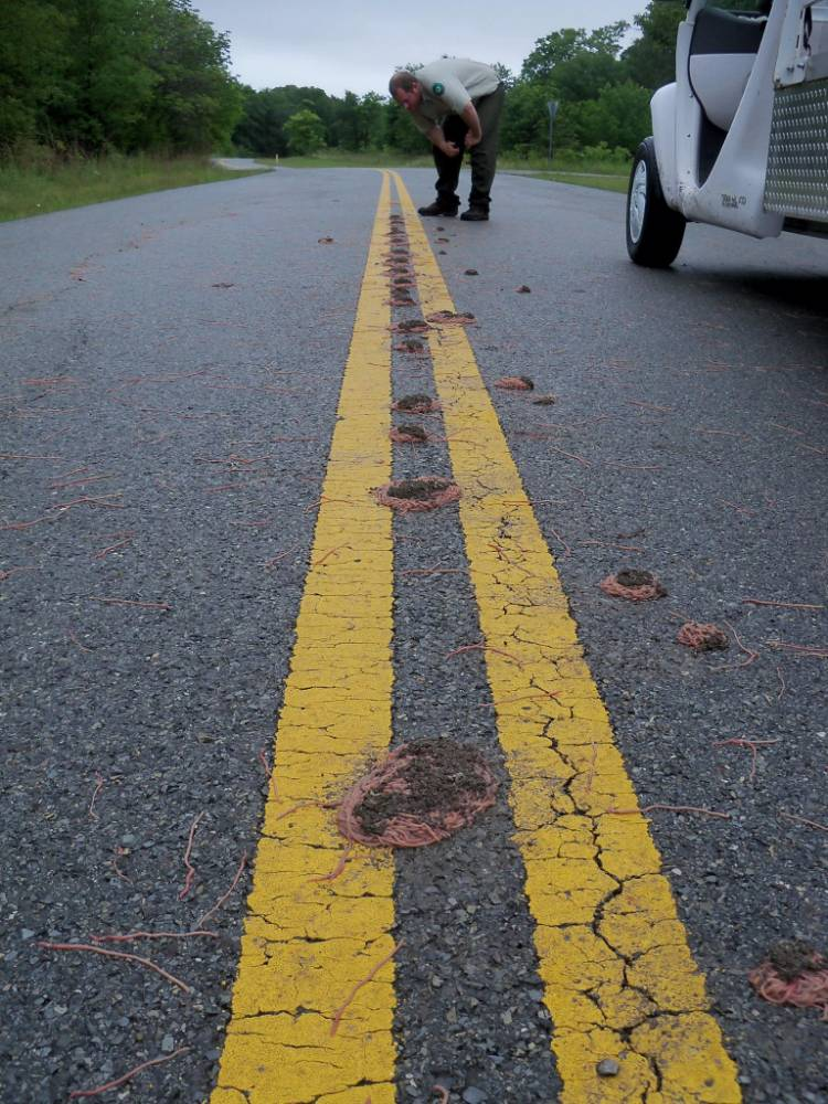 Texas Floods: Piles of Worms Mysteriously Show Up Along Roads Credit: Eisenhower State Park - Texas Parks and Wildlife/ Facebook
