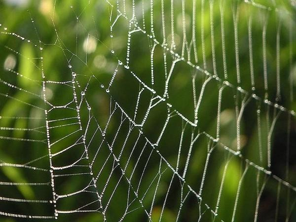 dew-and-spiderwebs-725x544