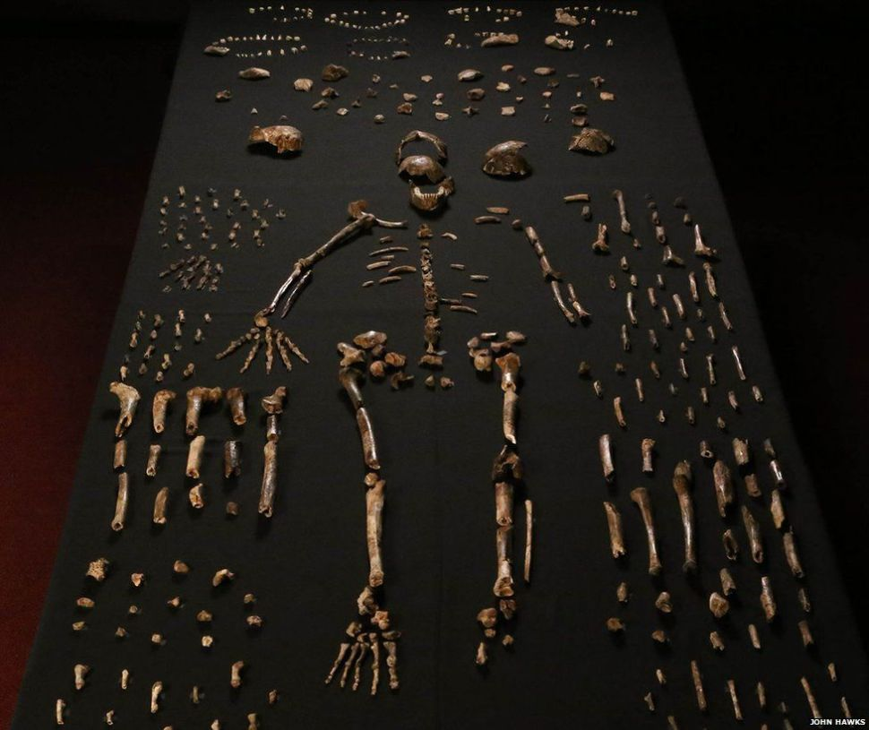 _85448683_01-homo-naledi-bone-table-vertical-john-hawks-cc-by