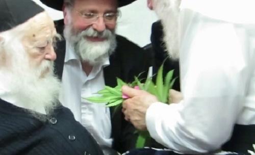 cannabis-kosher-passover14