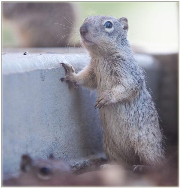 Photo: Squirrel Creek Lodge