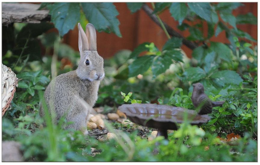 joey-the-bunny