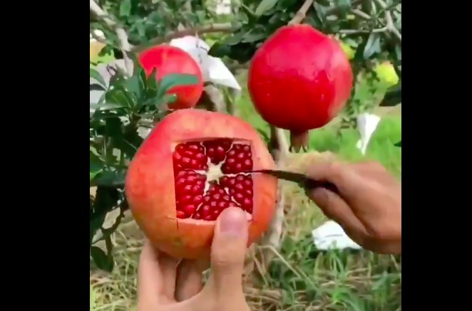 How to cut open a pomegranate the smart way