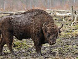 Wildlife Conservation Awareness -