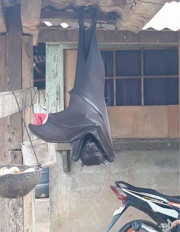 Photo of a freaky human-sized bat