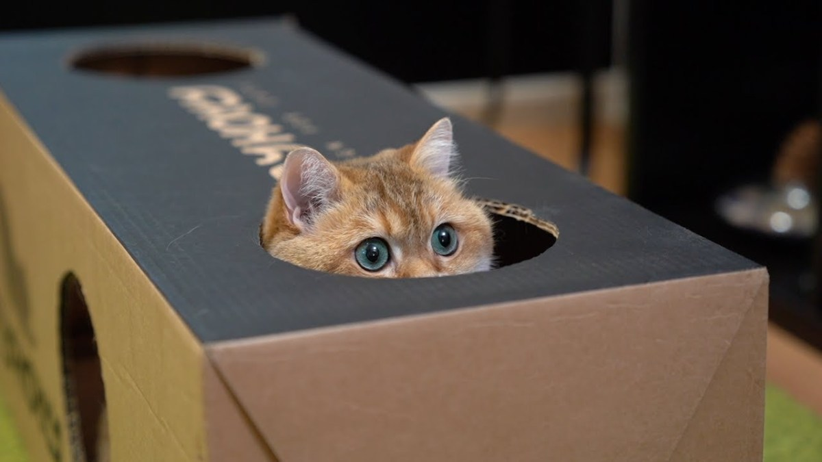 Why do cats love hiding in cardboard boxes so much? | Boing Boing