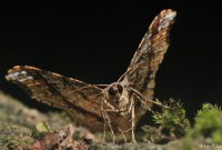 Photo of a moth by Andrew Snyder Photography
