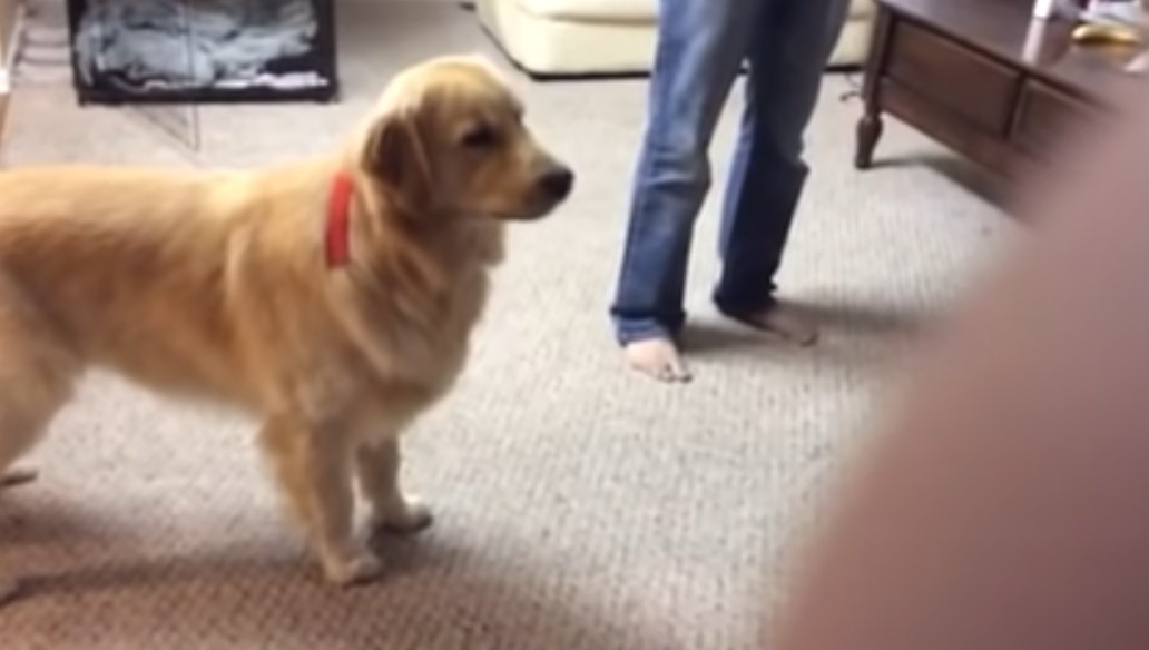 Dog learns new howl | Boing Boing