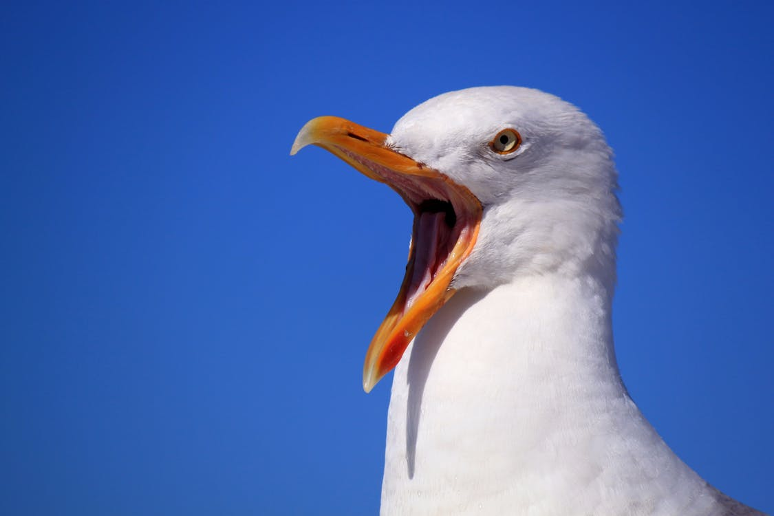 Seagull swoops down and eats man's tongue after woman bites it off in brawl | Boing Boing