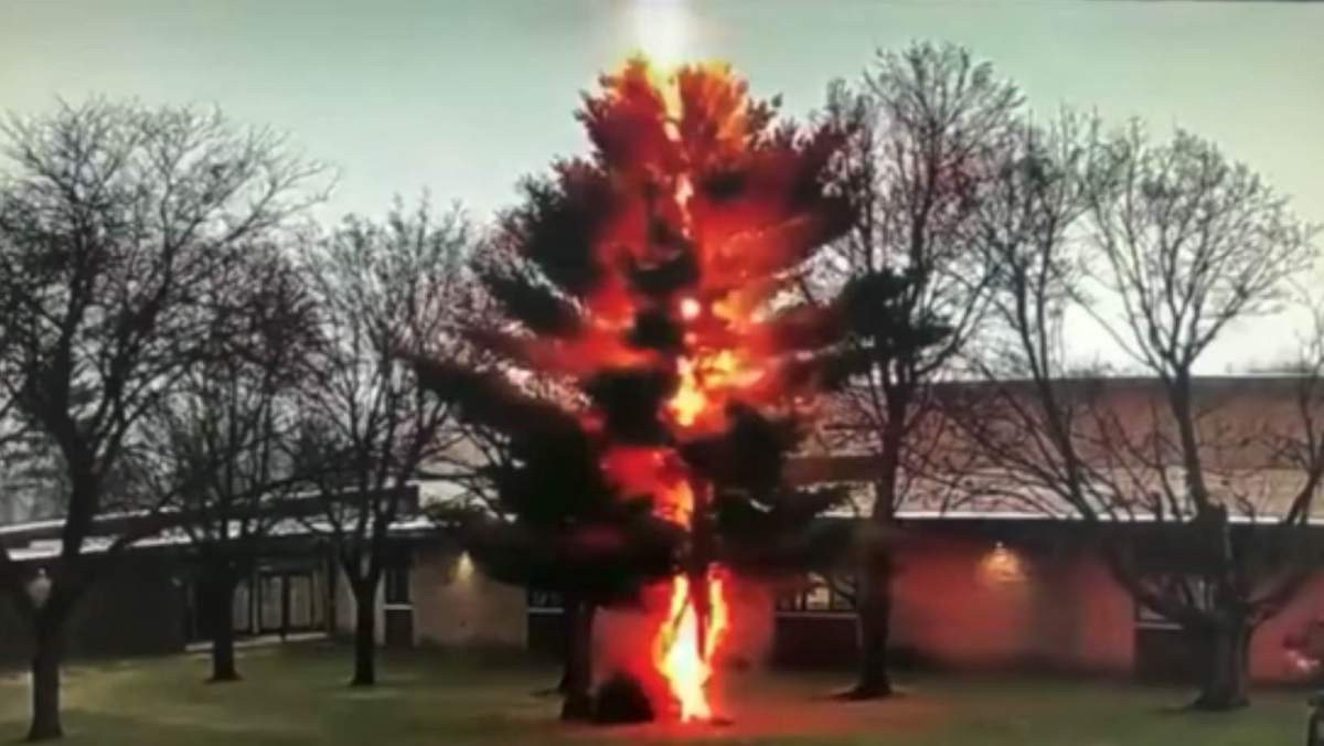Incredible video of a lightning bolt disintegrating a tree outside a high school yesterday | Boing Boing