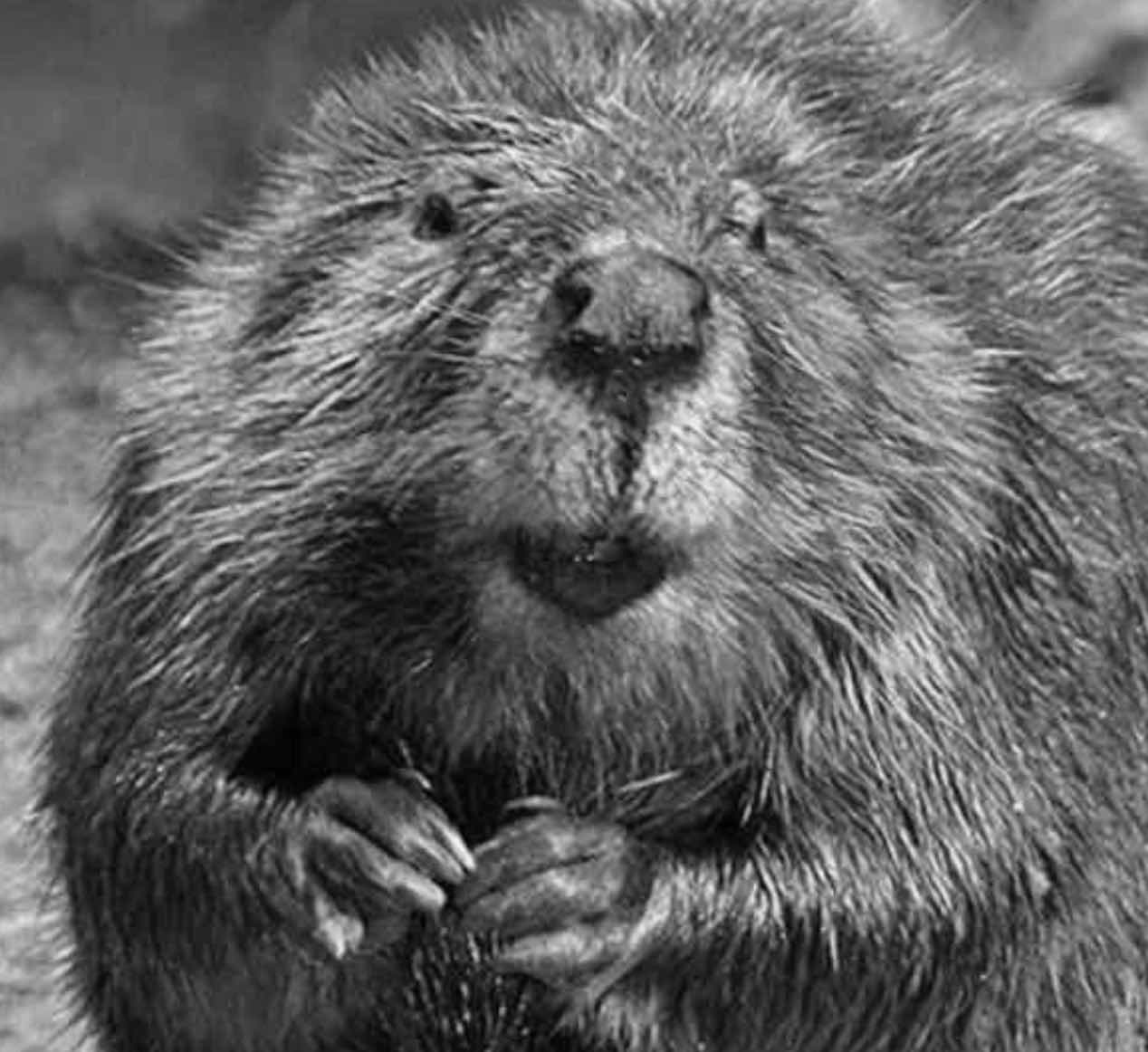 Man tells captivating story about the time he was attacked by a beaver