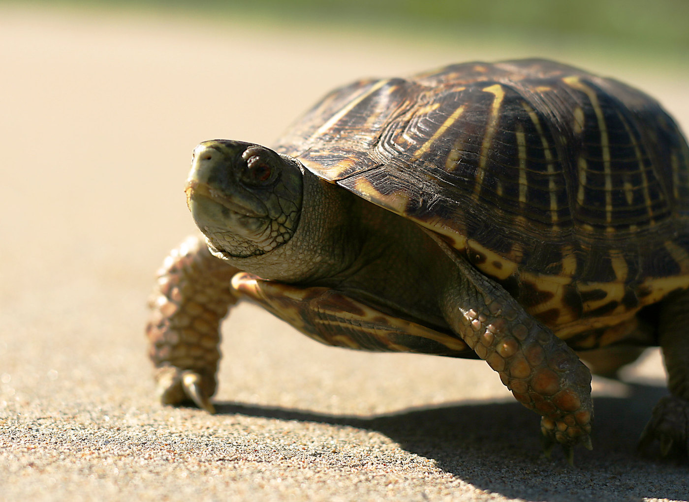 A car passenger is struck in the head by a flying turtle (in Florida, of course)