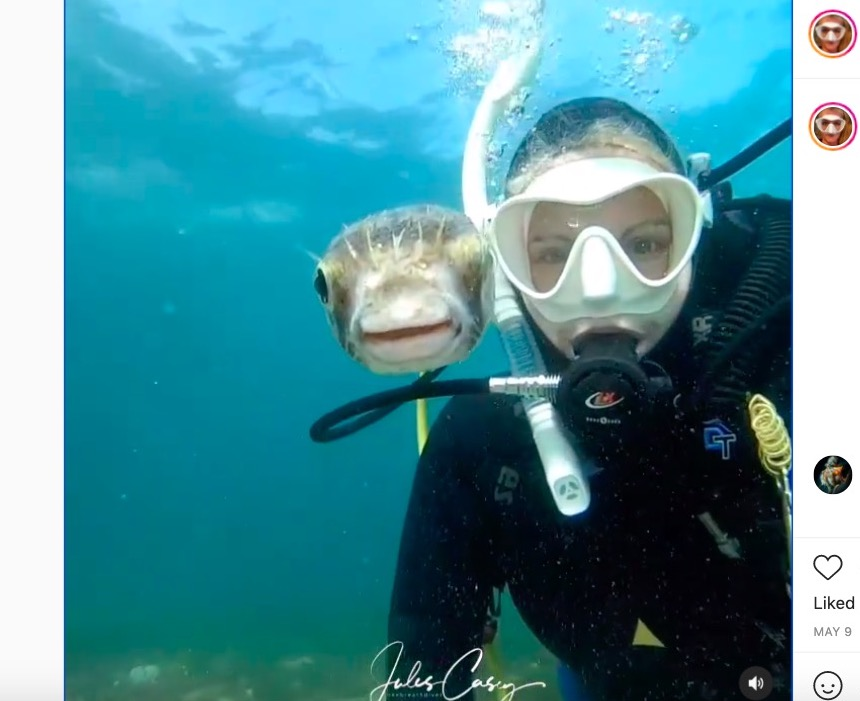 Watch: This adorable pufferfish poses for a scuba diver's selfie