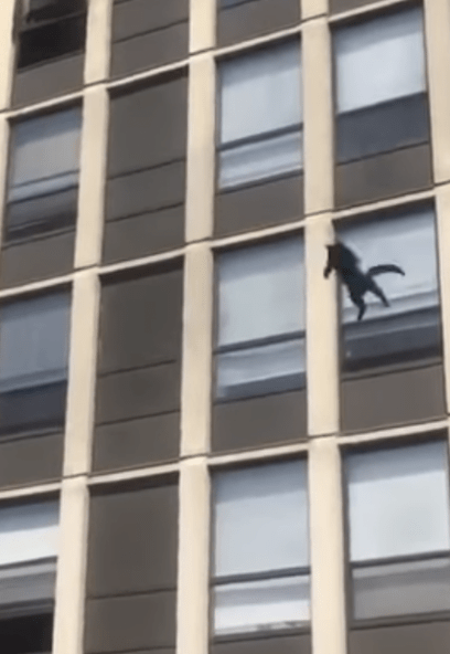 Successful 5-story free fall for daredevil cat escaping fire
