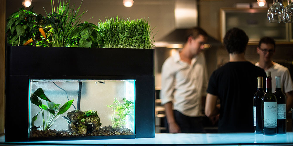 The AquaSprouts Garden is a fascinating, self-contained world, and it can even make you salad | Boing Boing