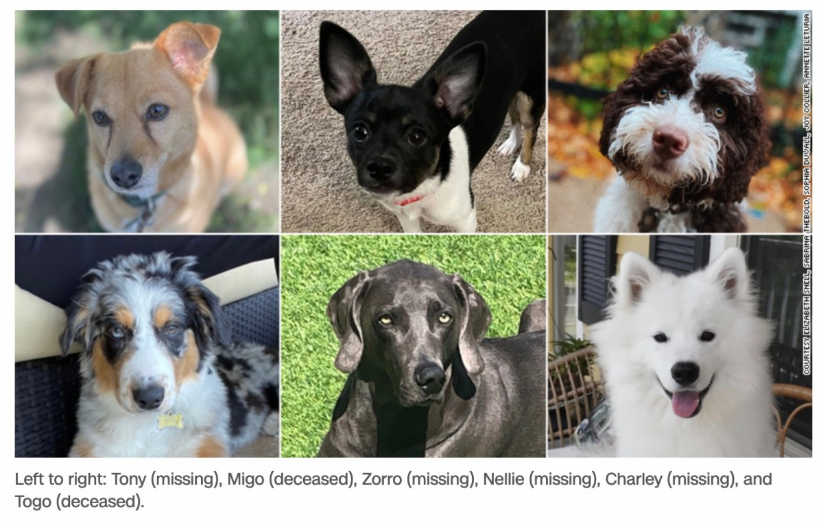 Horror stories of dogs abused, dead or missing while being looked after by Rover sitters | Boing Boing