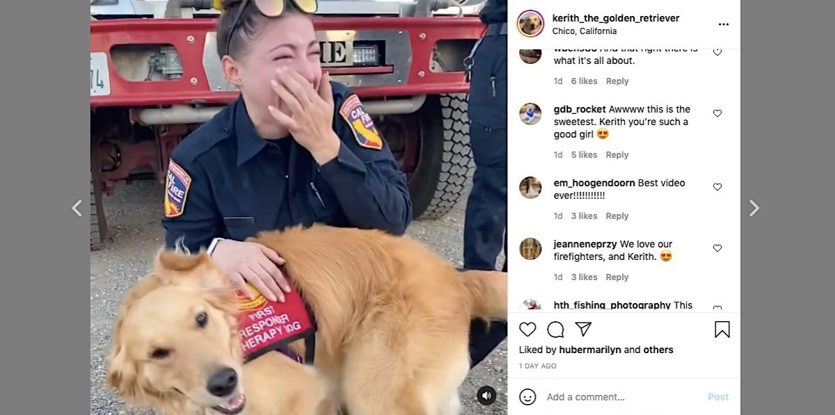 A therapy dog cuddles an emotional California firefighter in heartwarming video | Boing Boing