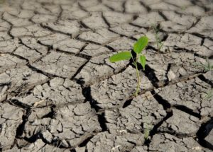 soil barren