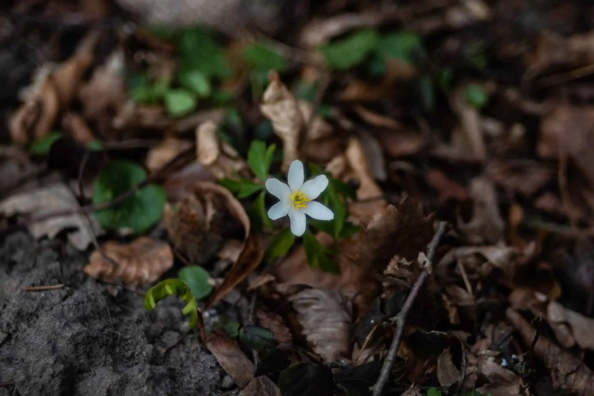 Wiosenny Las Fujinon 58mm F2.2 3 scaled - Najlepszy prezent dla fotografa jest darmowy. Resztę kupisz do 100 pln