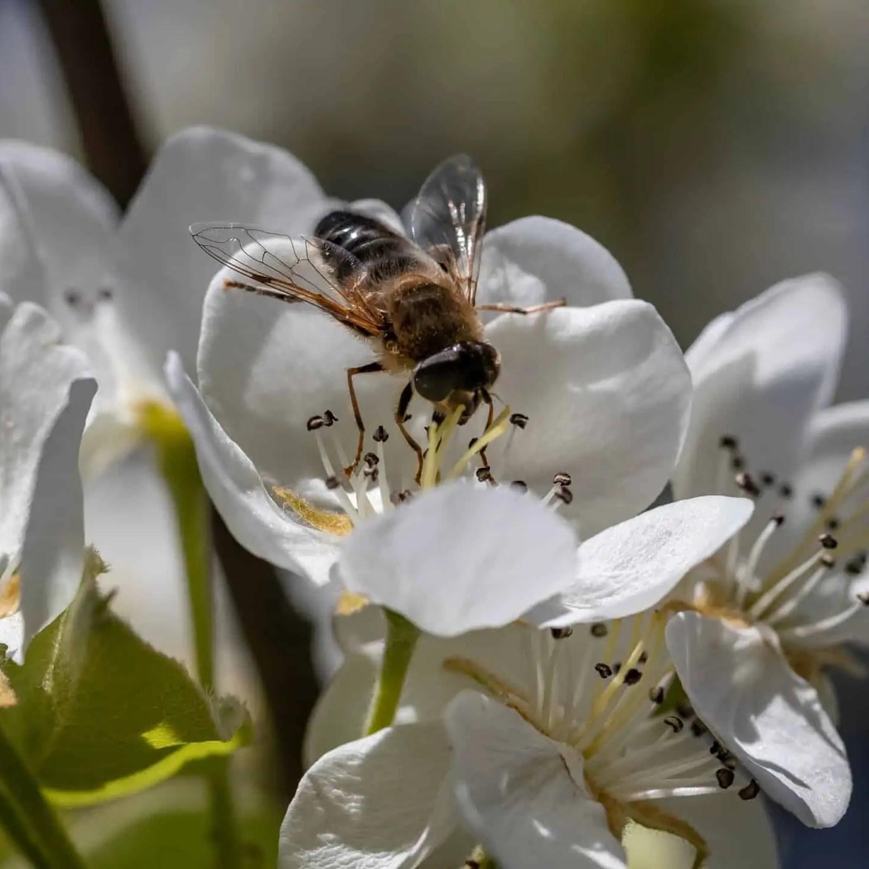 Polska pszczoła - Zasady kompozycji - przewodnik po 20 regułach