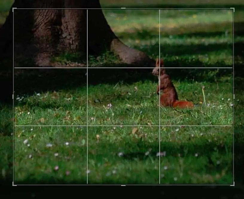 image - Przestrzeń negatywna w fotografii