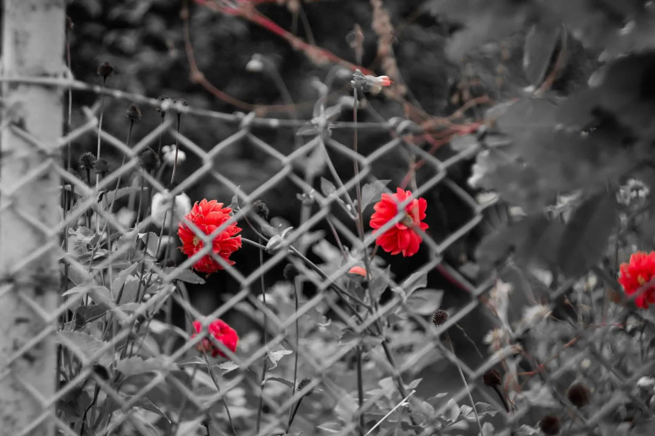 Fotografia z jednym kolorem przyklady zastosowania barw 6 - Fotografie do druku