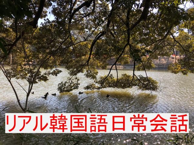 リアル韓国語日常会話「大宮公園のカモ」