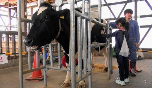 【新潟市南区】搾り取れ! 牛の乳を! 『アグリパーク』で