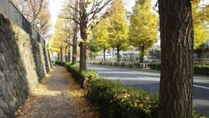 yoyogi-park-10