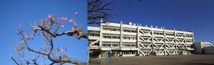 南砂小学校-2