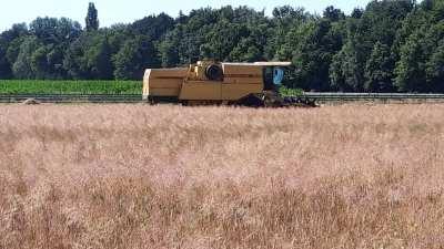 Mooi oogstweer