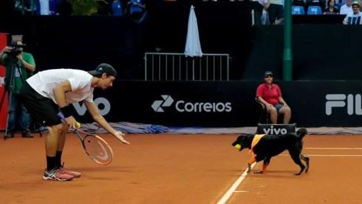 Apanha-bolas caninos estão de regresso este ano ao Brasil Open