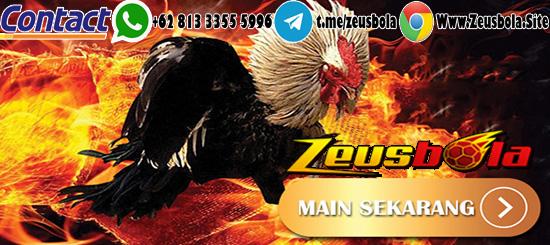 Sabung Ayam Digmaan Via Linkaja