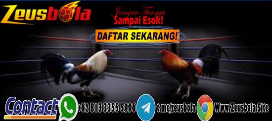 Sabung Ayam S128 BANK BNI