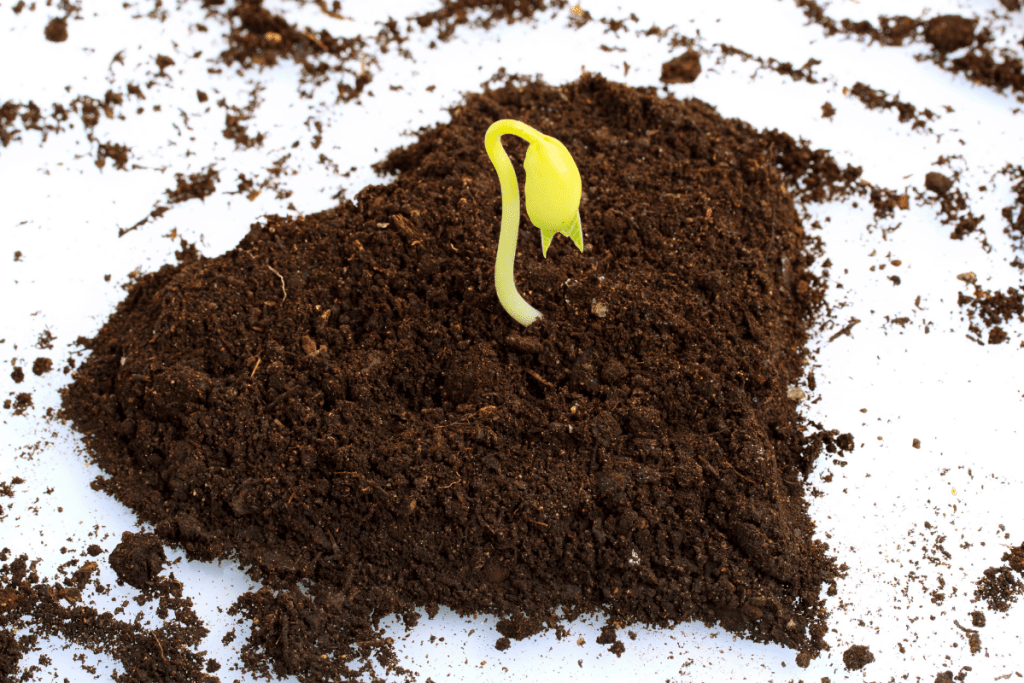 Meet Your Root Chakra: A small plant growing from heart-shaped soil