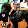 Balance Assistance Harness™ for service dogs