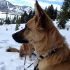 BLD's Quick Release Collar™ - Leather dog collar with metal buckle