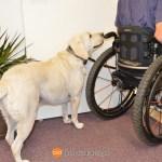 going through door 1008 - Service Dogs in Action