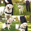 BLD's Guide Dog Lead